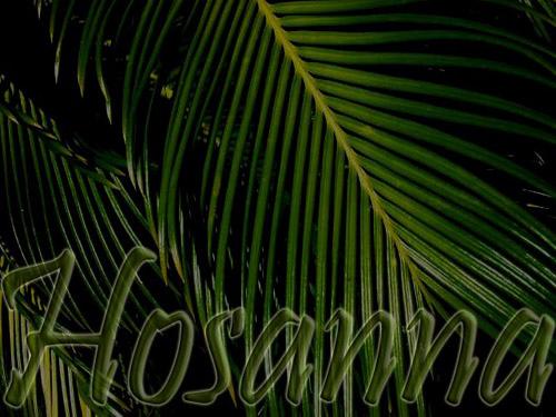 BLCF: hosanna_palms