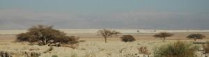 BLCF: judean-desert-wide