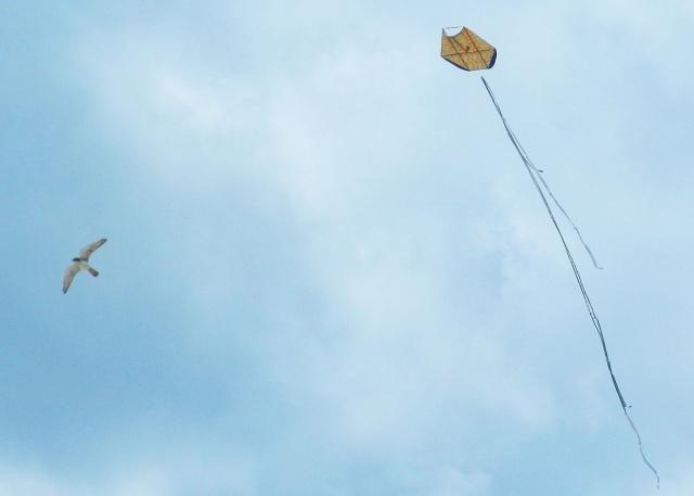 BLCF: a Bird and a Kite