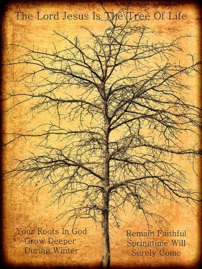 BLCF: the-lord-jesus-is-the-tree-of-life-kathy-clark
