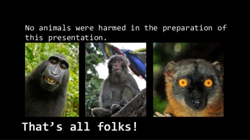 BLCF: no-monkeys-were-harmed-wordpress