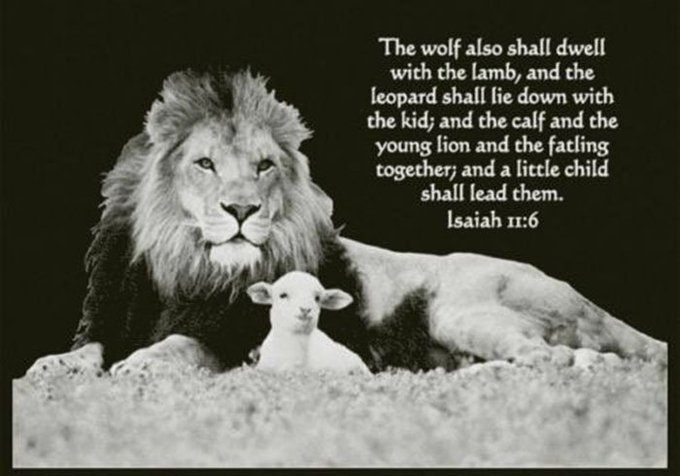 A Child Shall Lead Them Isaiah 11-6